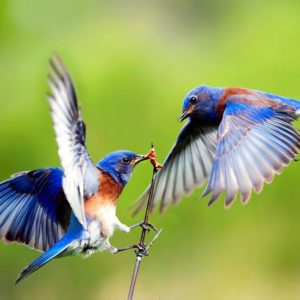 معلومات عن الطيور وأنواعها