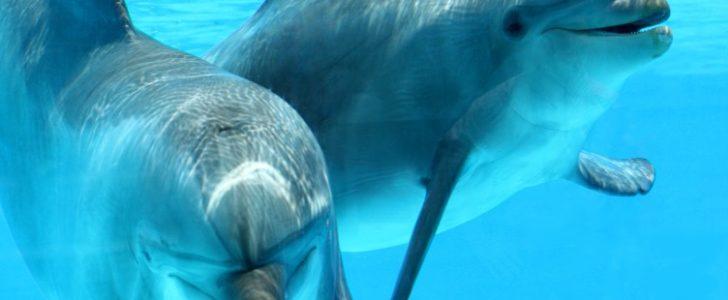 معلومات عن حيوان الدلفين
