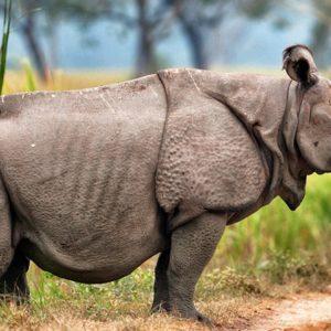 معلومات عن حيوان وحيد القرن