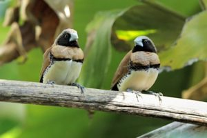 موضوع عن الطيور