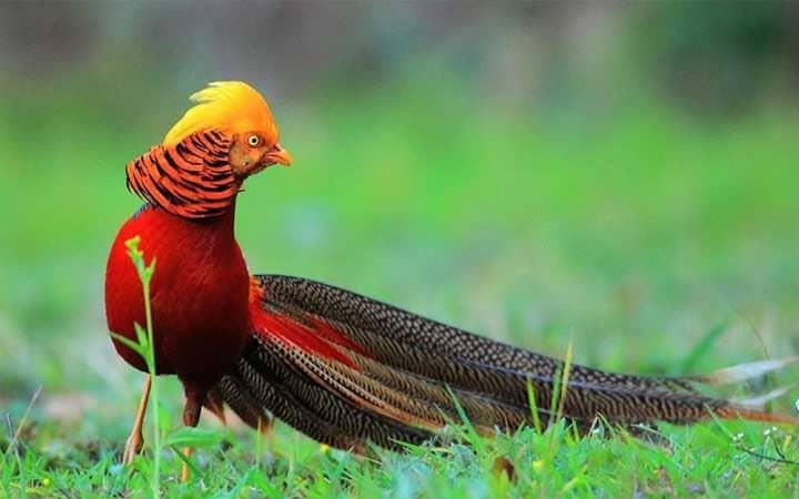 أجمل أنواع العصافير معلومات عنها طرق العيش الغذاء بيئتها التربية المنزلية و التكاثر أكبر موضوع شامل