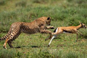 معلومات عن الحيوانات المفترسة