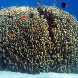 معلومات عن حيوان المرجان البحري