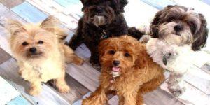 أنواع الكلاب وأسمائها
