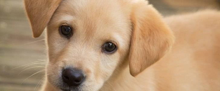 كيفية تربية الكلاب