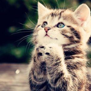 حقائق عن القطط لم تسمع بها من قبل