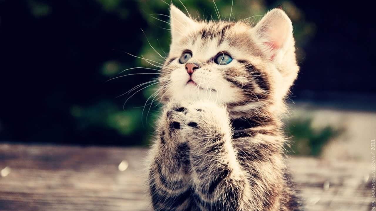 أهم الحقائق عن القطط