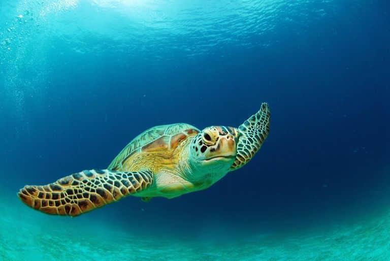 أنواع السلاحف البحرية