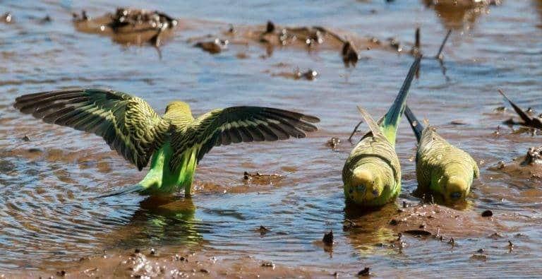 أقدم الطيور