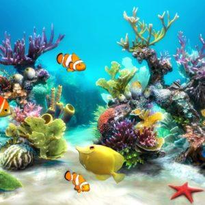 معلومات عن الحيوانات البحرية
