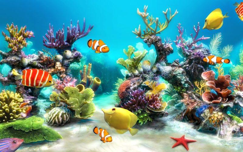 الحيوانات البحرية