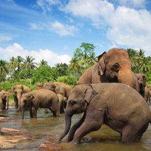 اين يعيش الفيل