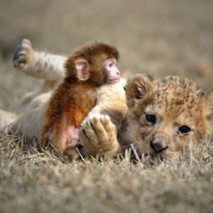 صغار الحيوانات