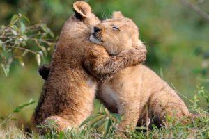 كيف تلد الحيوانات صغارها