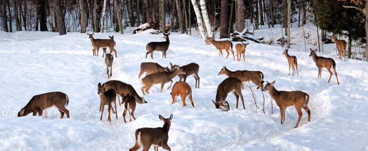 حياة الحيوانات في الشتاء