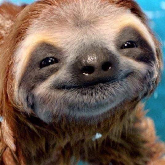 حيوان الكسلان مبتسم