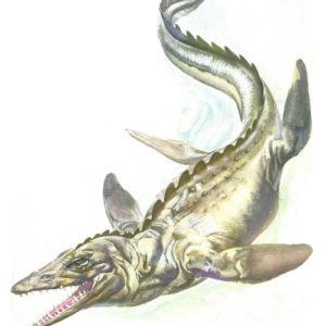معلومات عن الديناصور التيلوساروس