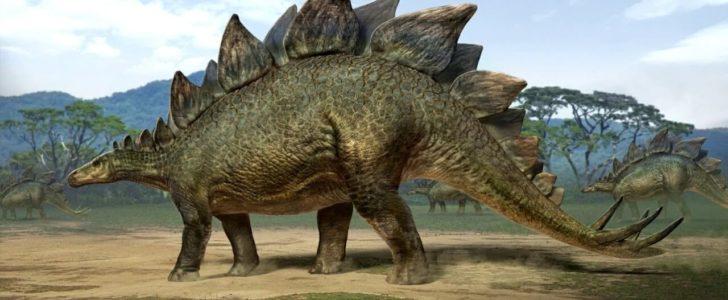 معلومات عن الديناصور ستيجوسورس