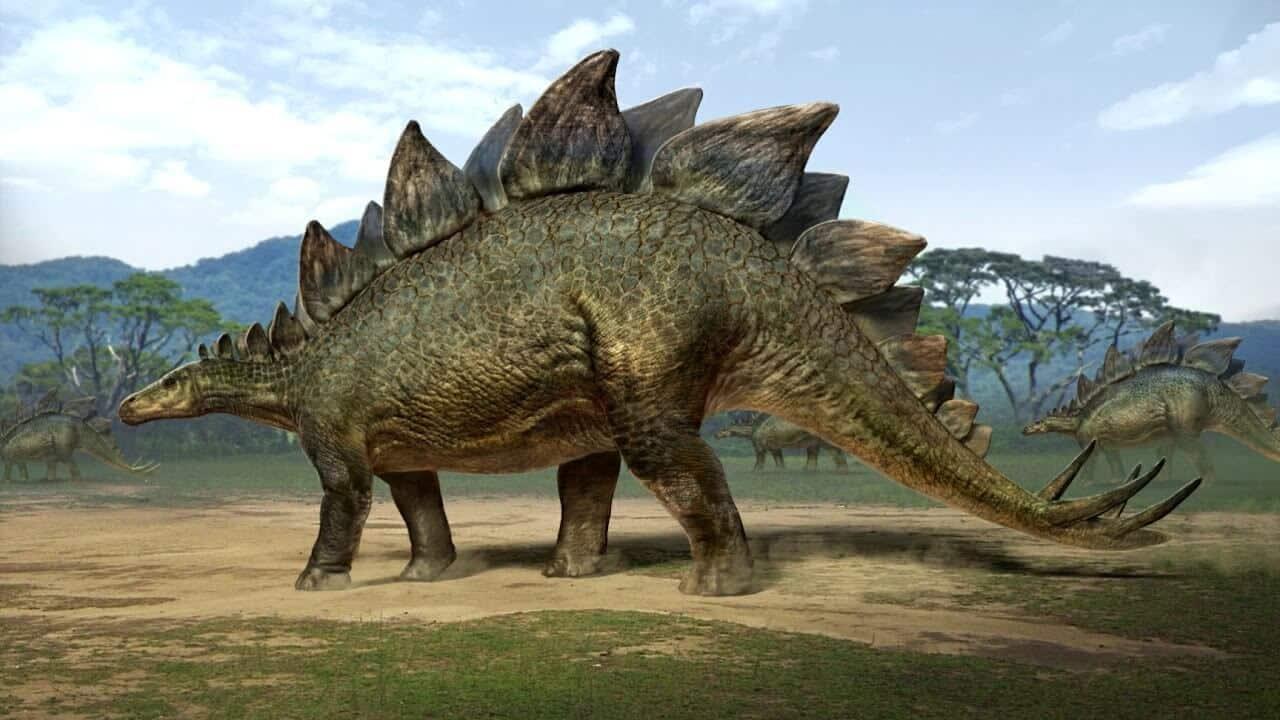 معلومات عن الديناصور ستيجوسورس معلومات عنها طرق العيش الغذاء بيئتها التربية المنزلية و التكاثر أكبر موضوع شامل