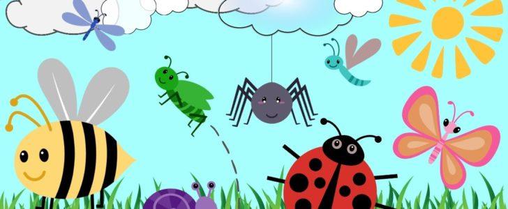 معلومات عن الحشرات للأطفال