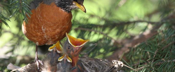 معلومات عن الطيور للأطفال
