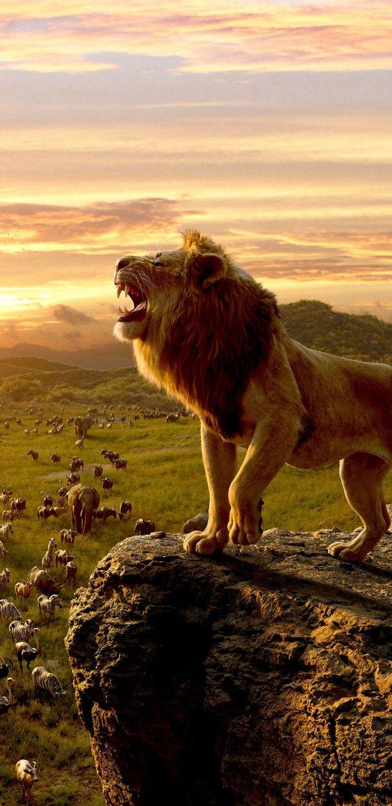 الأسد ملك الغابة