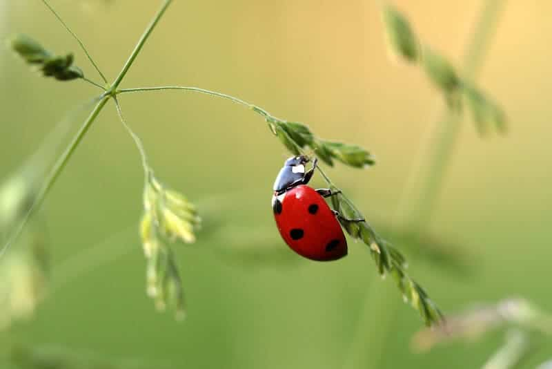 معلومات عن عالم الحشرات