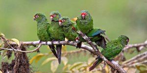 معلومات عن عالم الطيور