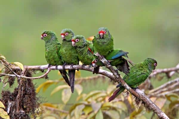 عالم الطيور
