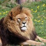 معلومات عن الحيوانات الفقارية