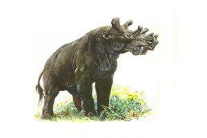 حيوان اليونتاثريوم