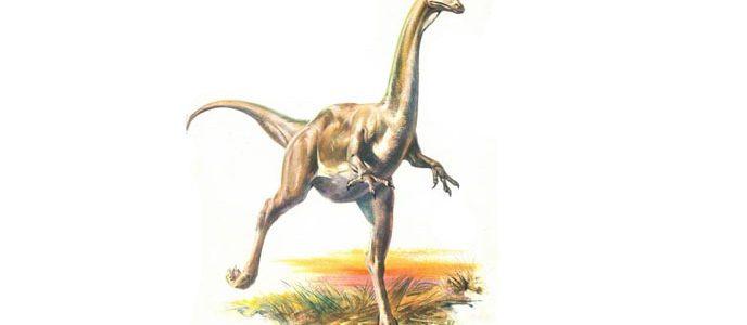 ديناصور ستروثيوميموس