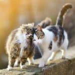 لغة القطط كيف تفهم ما تقوله قطتك لك