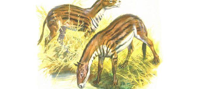 حيوان أيوهيبوس