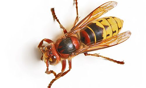 عالم الحشرات المدهش
