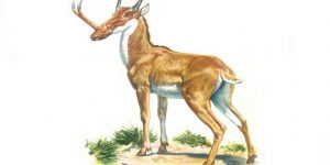حيوان السينثينوسيراس