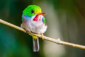 أجمل حيوان في العالم