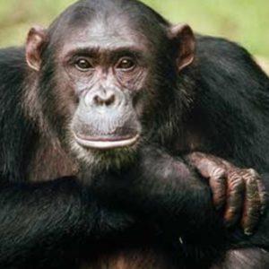 أذكى الحيوانات في العالم