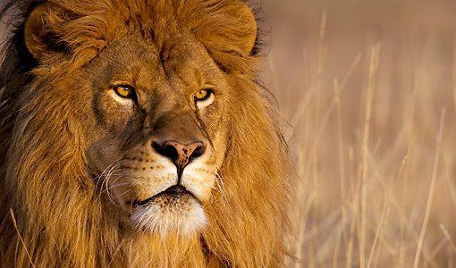 أشرس الحيوانات في العالم