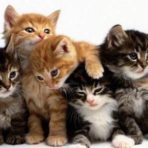 معلومات بسيطة عن القطط للاطفال