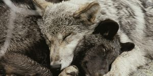 هل تعلم كيف تنام الحيوانات