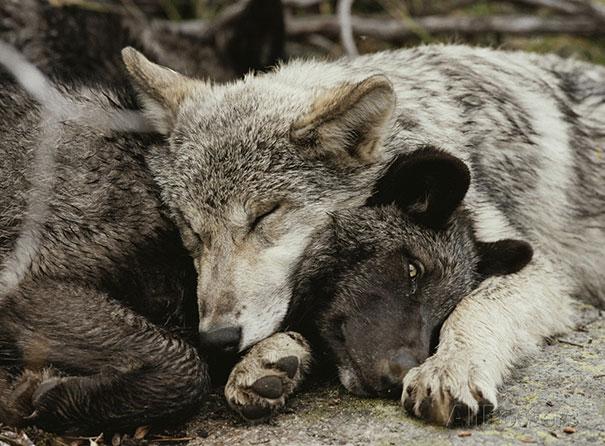 كيف تنام الحيوانات
