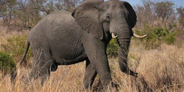 ما هي أطول الحيوانات عمرًا