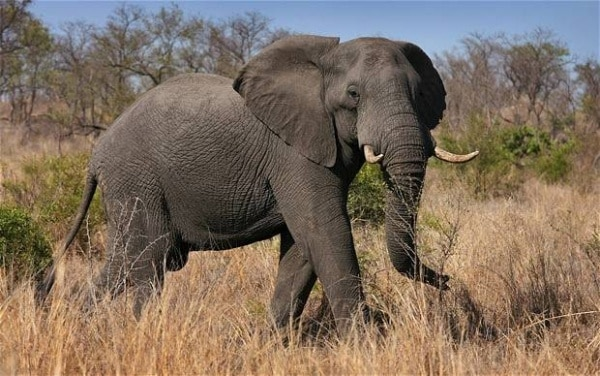 أطول الحيوانات عمرًا