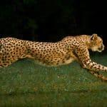 بحث حول تنقل الحيوانات