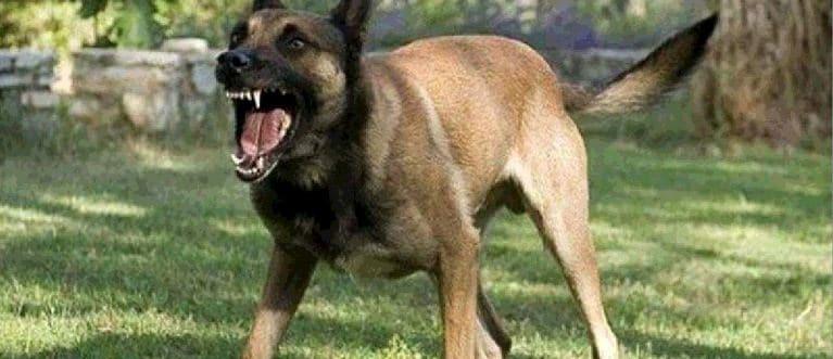أشرس أنواع الكلاب في العالم