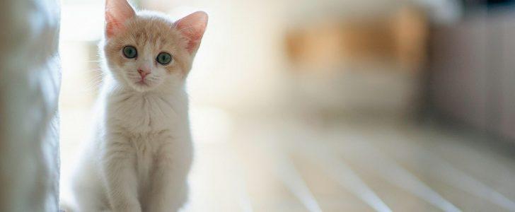 تربية القطط الصغيرة