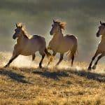 أجمل خيول العالم