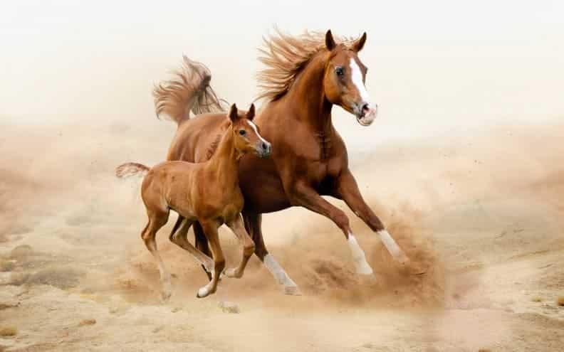 حقائق و معلومات عن الخيول