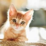 عالم القطط ماذا تعرف عنه؟